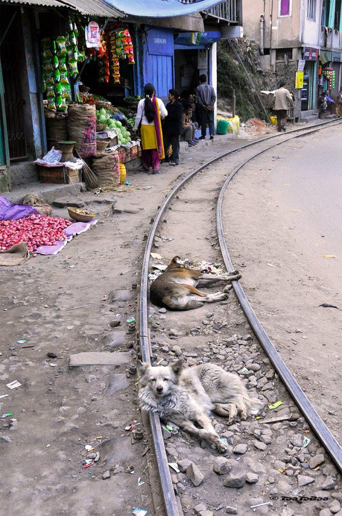 Ligne du chemin de fer du Toy Train