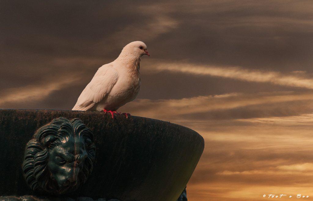 Pigeon sur un vase antique du Pont Napoléon à Lille